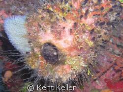 Psychedelic Sponge by Kent Keller