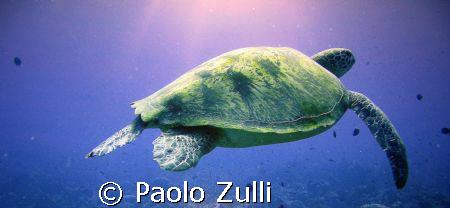 la bella tartaruga by Paolo Zulli
