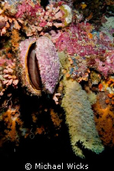 Clam coral sponge invertebrate by Michael Wicks
