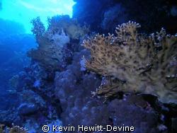 Marsa Alam 2008 - Nikon Coolpix 5400 -  Sea & Sea YS90 Au... by Kevin Hewitt-Devine