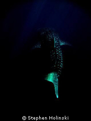 Whaleshark in the deep.  Photoshopped until I got this lo... by Stephen Holinski