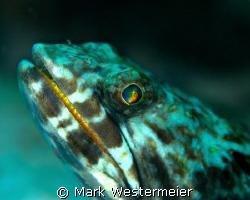Gazing - Image taken in Bonaire with a Nikon D100, 105mm ... by Mark Westermeier