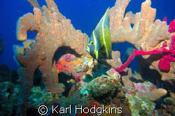 Angels reef. It always amazes me how much colour there re... by Karl Hodgkins