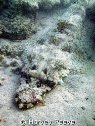 crocodile fish in natural light by Harvey Reeve