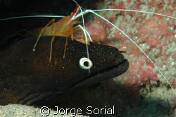Lady Scarlata and Moray Eel in perfect harmony by Jorge Sorial