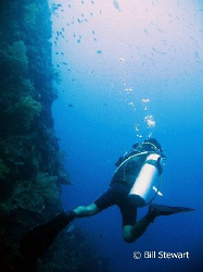 Diving the wall at Tubla Point, Moaboal, Cebu, Philippine... by Bill Stewart