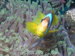 Marsa Alam 2008 - Nikon Coolpix 5400 - Sea & Sea YS90 Aut... by Kevin Hewitt-Devine