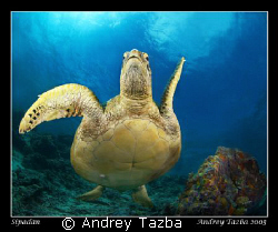 Turtle dance. by Andrey Tazba