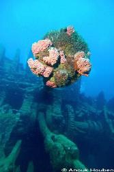 Crankshaft of the Conch wreck off Hikkaduwa, Sri Lanka. by Anouk Houben