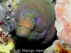 Moray eel by Marian Hernando