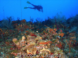 fernando in the edge of g point dive site at parguera wall! by Victor J. Lasanta