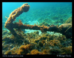 anchor in jamaica by Margo Cavis