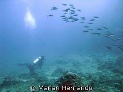 taken in Bunaken, North Sulawesi, Indonesia by Marian Hernando