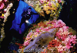 "a diver entering a clourful ""coral cathedral"" off the coa... by Geoff Spiby"