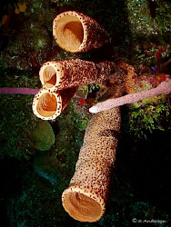 Diving off CoCo View Wall in Roatan. Lots of sponges and ... by Steven Anderson