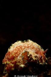 Chromodoris cincta. Picture taken on the second reef off ... by Anouk Houben