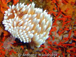 Taken at thunderbolt reef with a Sony P8 @ 1/40 F2.8  Nu... by Anthony Wooldridge