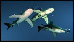 Sharks!!! by Dray Van Beeck