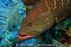 Where are those damn cleaner fish? I  brush and I floss b... by Michael Canzoniero