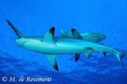 Cross roads! Two black tip sharks. D50/12-24mm (Borabora) by Moeava De Rosemont
