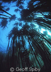 in the kelp forest by Geoff Spiby
