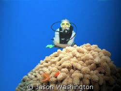 Diver on North Wall Grand cayman by Jason Washington