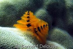 Panorama Reef South by Bernard Delouye