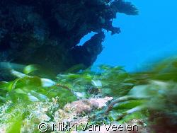Seagrass movement taken with a very slow shutter (1 secon... by Nikki Van Veelen