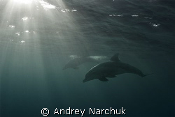 Behind a wave. Dolphin & sun rays by Andrey Narchuk