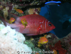 Masa Alarm 2008 - Nikon Coolpix 5400 - Sea & Sea YS90 Aut... by Kevin Hewitt-Devine