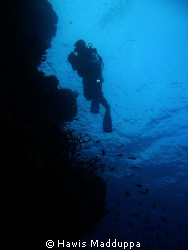 A diver on coral reef monitoring by Hawis Madduppa