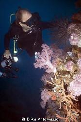 Diver looking coral. by Erika Antoniazzo