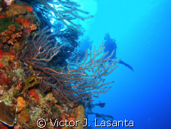 above the edge of the wall at v.j.levels dive site in par... by Victor J. Lasanta