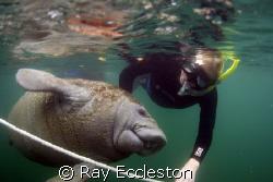 Dive Buddies. Camera Nikon D-200 by Ray Eccleston