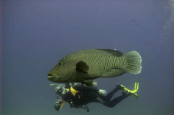 BEB and Napoleon Shot 2007 in Namaa Bay, Sharm el sheikh. by Trygve Borge