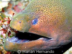 Morey eel's best smile. Taken in Bunaken, North Sulawesi ... by Marian Hernando