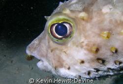 Marsa Alarm 2008 - Nikon Coolpix 5400 - Sea & Sea YS90 Au... by Kevin Hewitt-Devine
