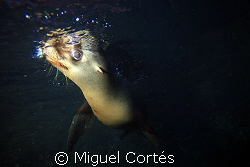 ........I'm looking at you by Miguel Cortés