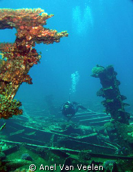 Diver swimming on the wreck of the Kormoran, taken with O... by Anel Van Veelen
