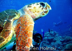 Taken with a Canon A630 and Sea and Sea single strobe.  W... by Stephen Holinski