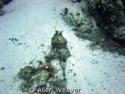 Cozumel, Palancar reef by Allen Weaver