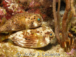what???????yes! in los arcos dive site at parguera area!! by Victor J. Lasanta