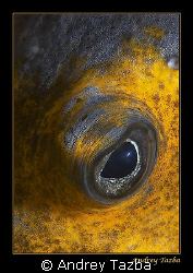 Eye of the sea. by Andrey Tazba