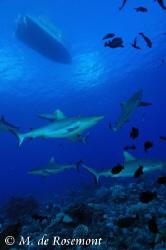 Ambiance at 70ft underwater. D50/12-24mm ikeliteDS125 (Mu... by Moeava De Rosemont
