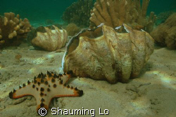 Giantclam with sea star. by Shauming Lo