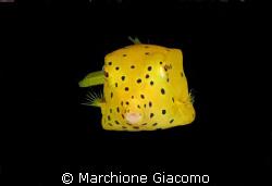 Box:Moal Boal -Cebu 2008. Nikon D200, 60 macro, two strobo by Marchione Giacomo
