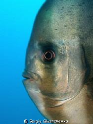 Fish by Sergiy Glushchenko