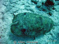 Slippery Lobster, Cozumel by Allen Weaver