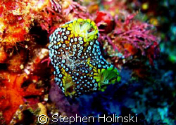 Spongy tunicate? Either way cool abstract shot. Found in ... by Stephen Holinski