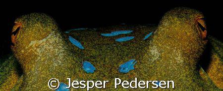 Spotted eyes by Jesper Pedersen
